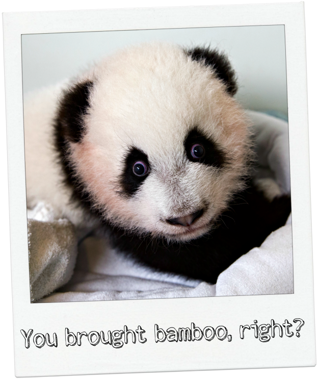 You brought bamboo, right?