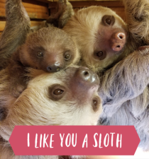 I like you a sloth